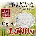 【送料無料】 国産 押はだか麦 1kg×5袋 うるち性 大麦